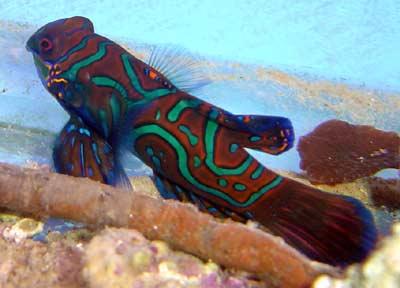 druženje s akvarijskim ribama