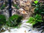 akvarijum 3.jpg